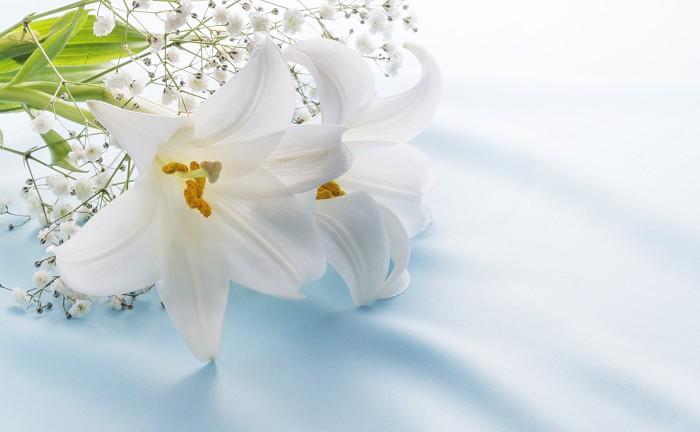 花 言葉 百合 百合(ゆり/リリー)の花束を贈るときに気をつけることまとめ